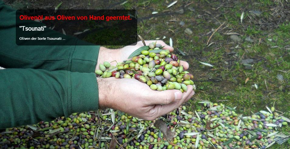 sarakina-olive-tsounati