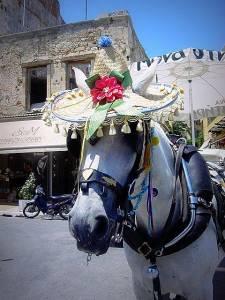 pferd-mit-sonnenhut1