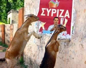 ziegen-syriza