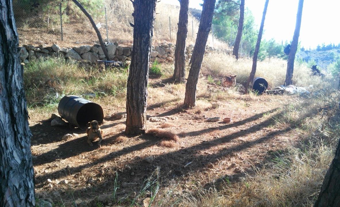 rethymno-tonnenhunde-25-08-2015