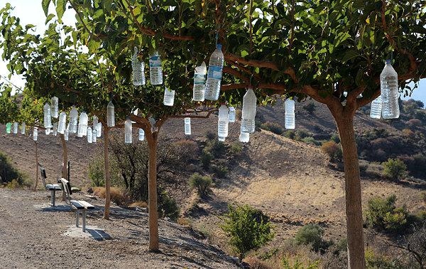 maulbeerbaum2