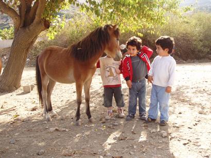 Skyros Ponys auf Korfu und Kreta?