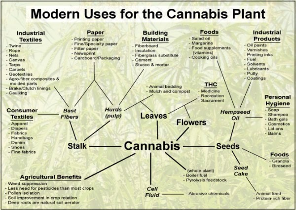 cannabis-grafik-by-sensiseeds-com_