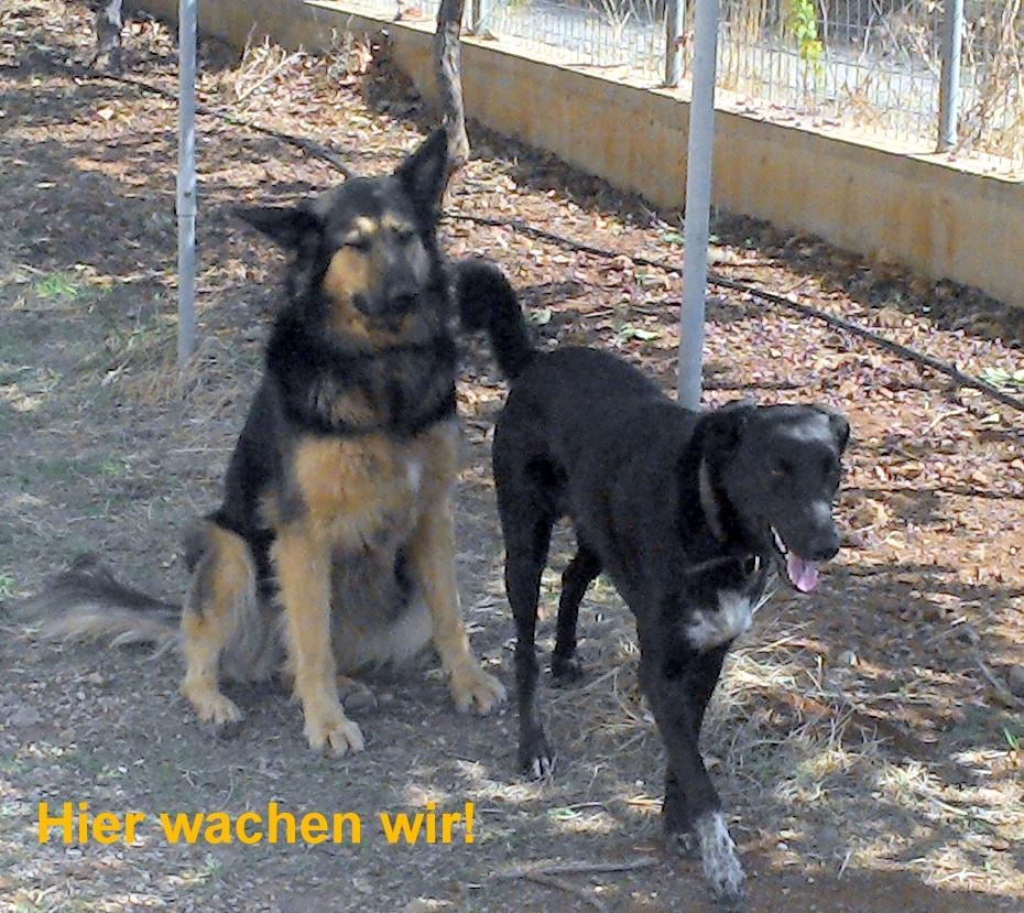 Hera und Linus