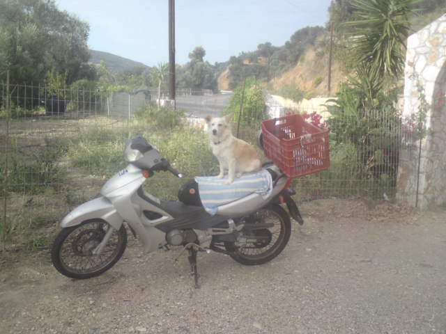 mitso-sitzt-auf-moped-1