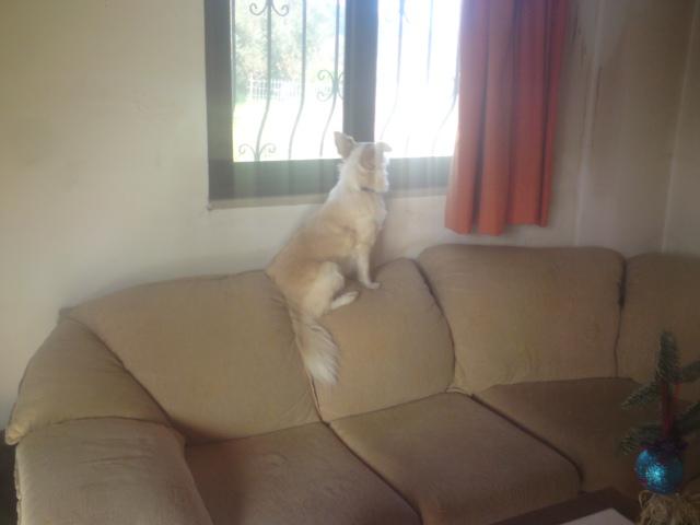 mitso-wartet-auf-couch