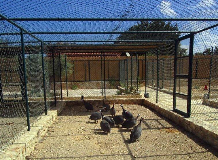 Stolidi Zoo