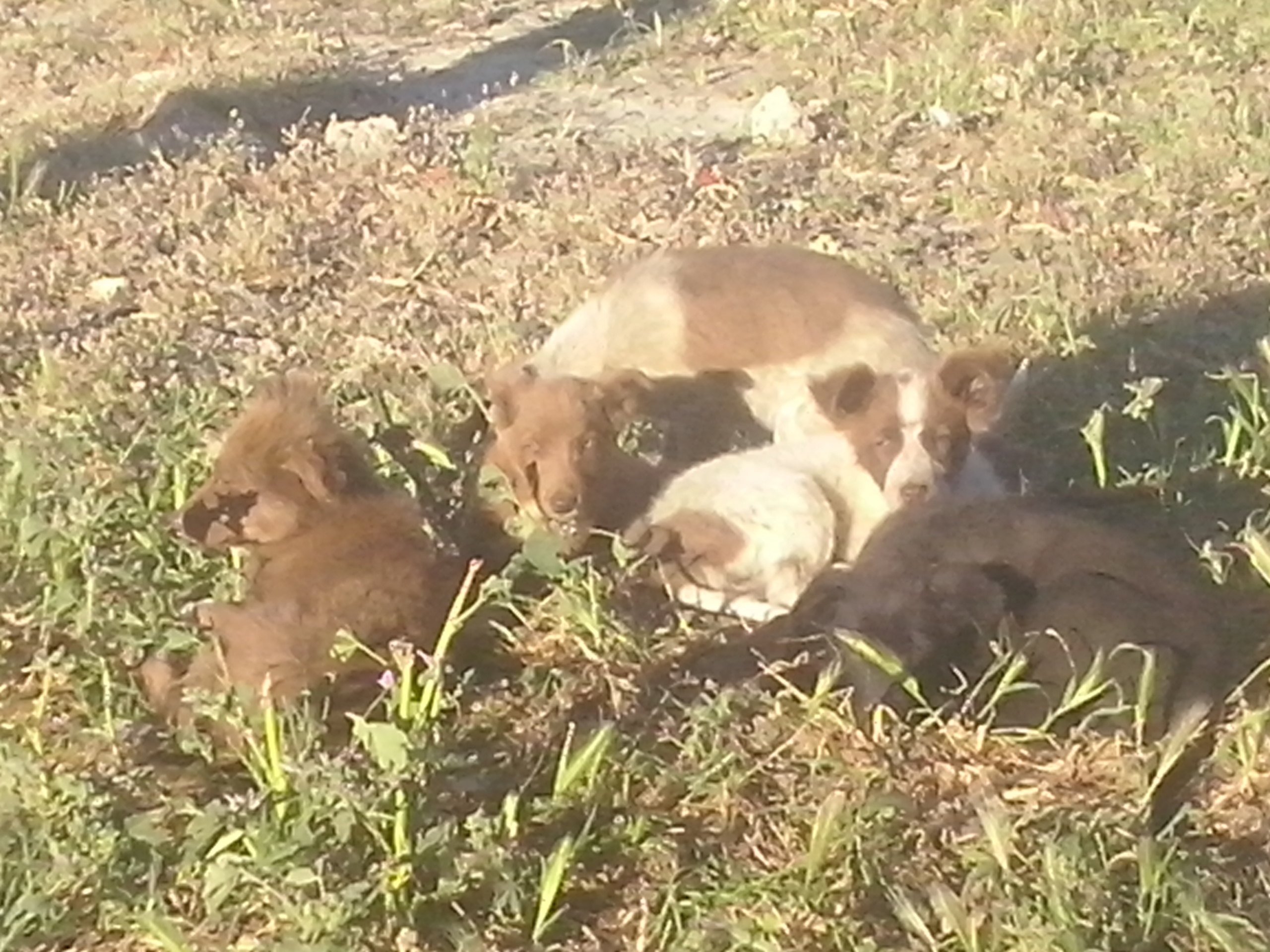 PAWS puppies lazing in the sun