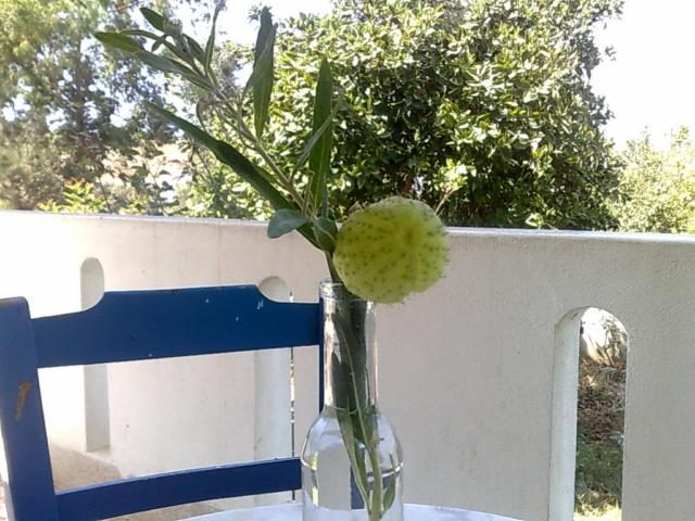 unbekannte-pflanze