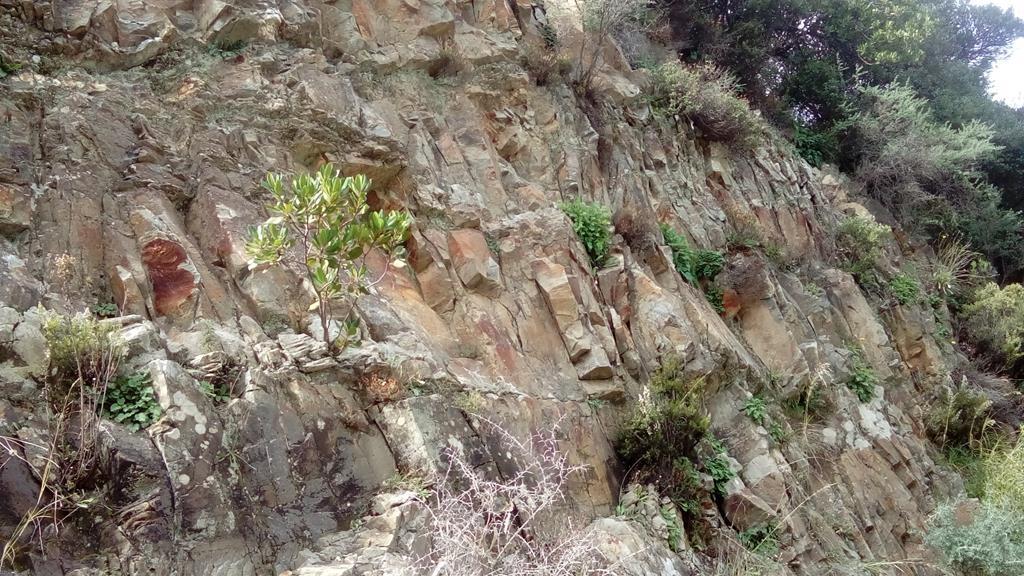 Sarakina bewachsener Fels