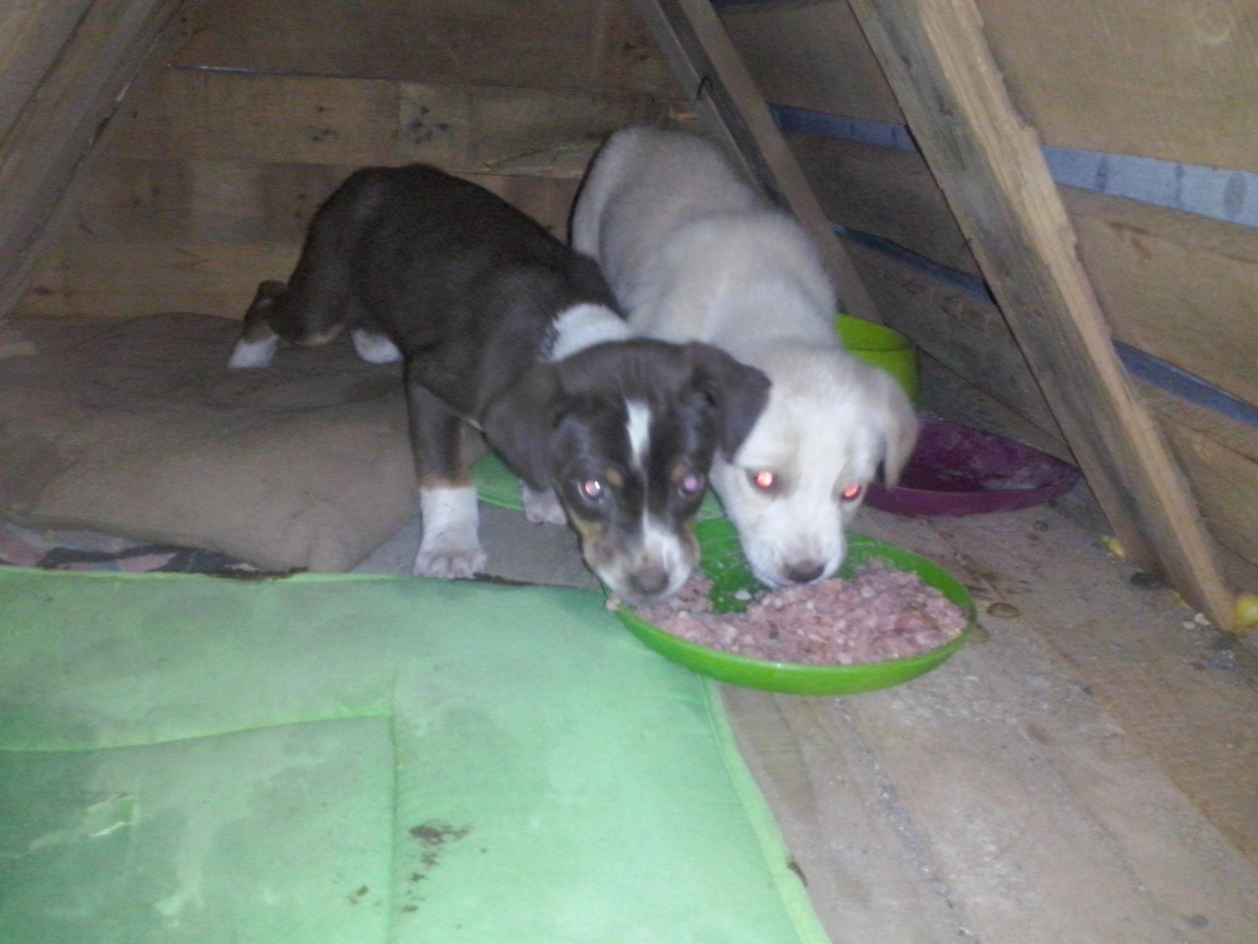 PAWS puppies beim Fressen in Huette Jan 2017