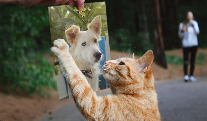 Mitso mit Katze