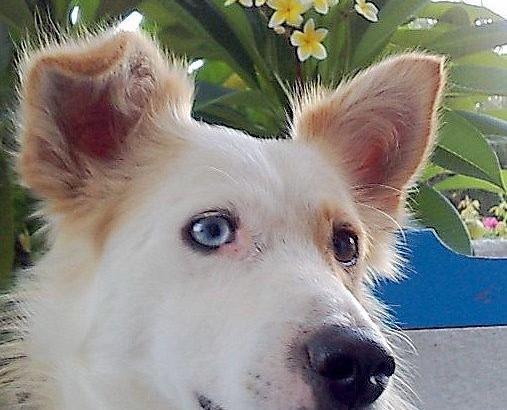 Mitso-Profil