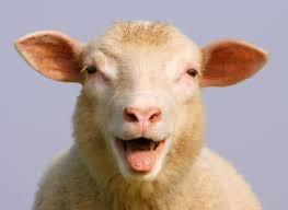bloekendes-Schaf