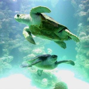 Caretta Caretta - Mit einem Klick zu den griechischen Meeresschildkröten