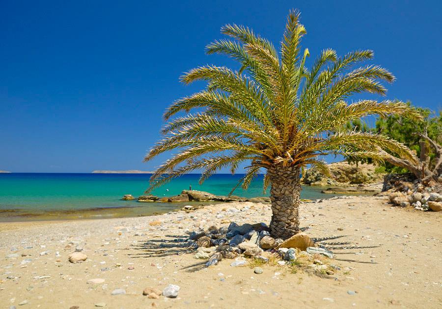 kreta-palme