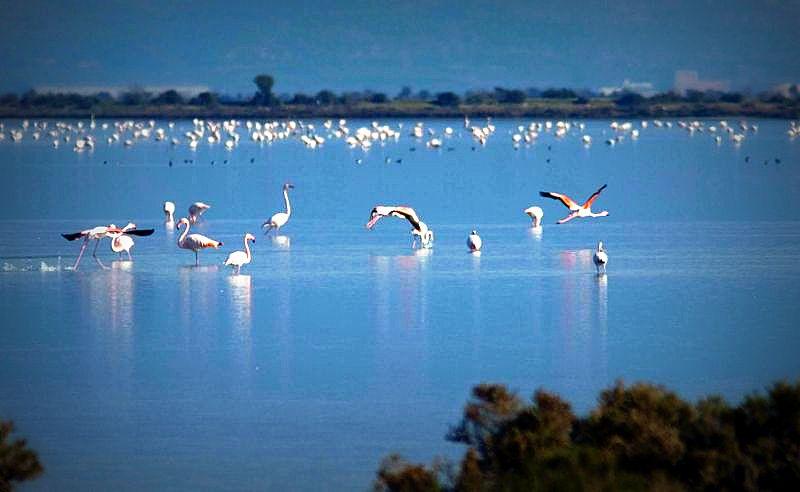maria-aliakmona-flamingos