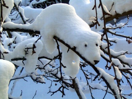schnee-kleiner-eisbar