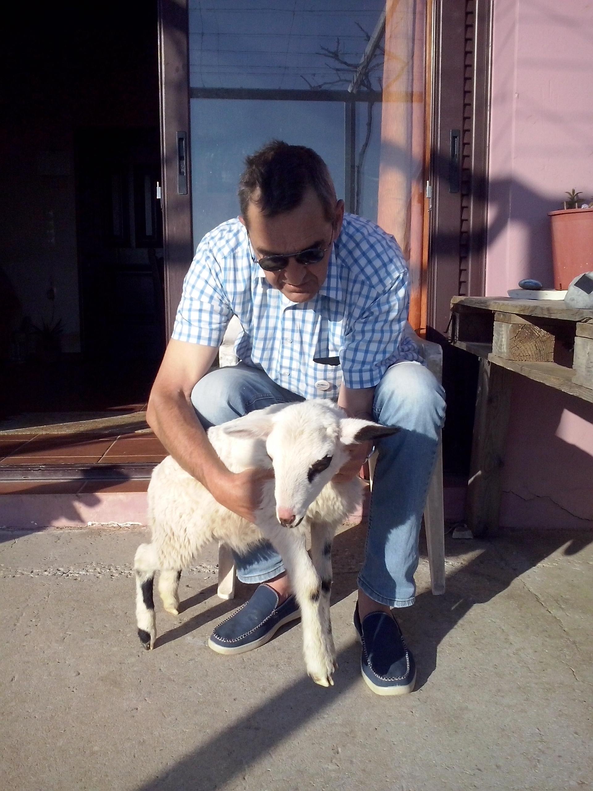 Scheff mit Schaf