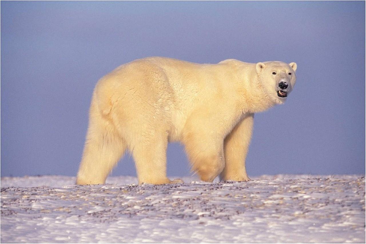 Arktis1