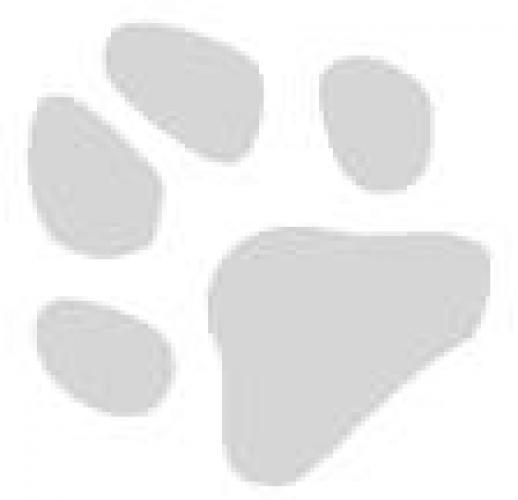 hundepfote1