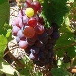 Wein Liatiko