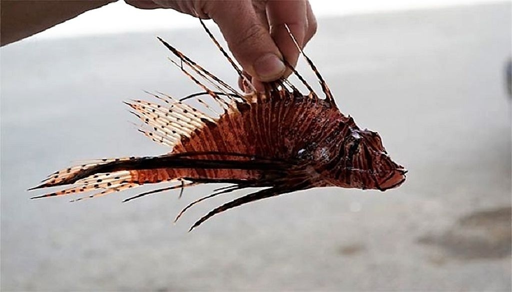Gift Vom Kugelfisch