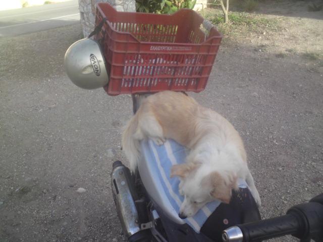 mitso-liegt-auf-moped-2