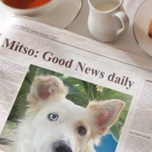 Mitso Good news daily
