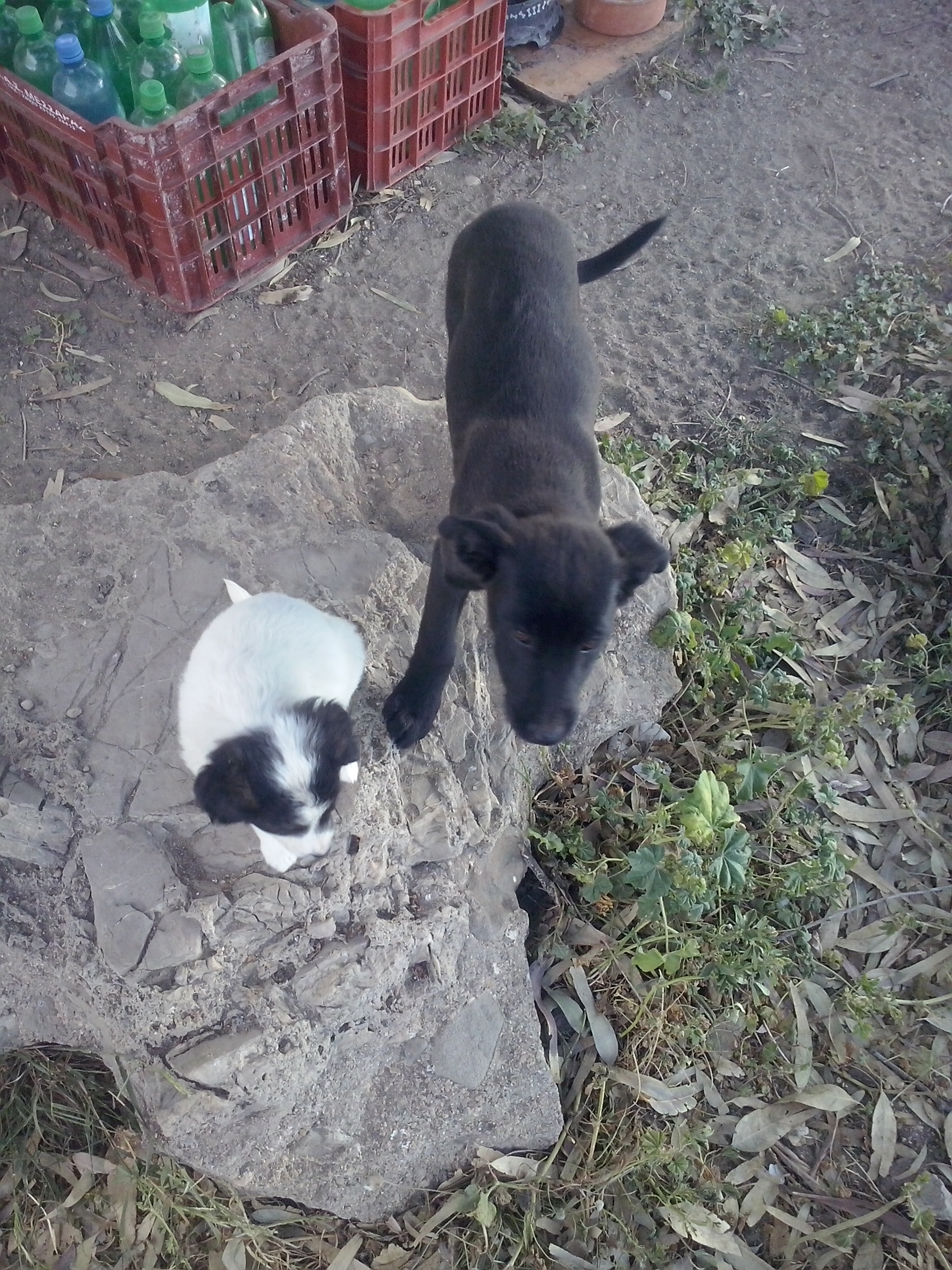 PAWS eben noch Baby, jetzt schon fast gross