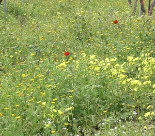 Blumenwiese Fruehling