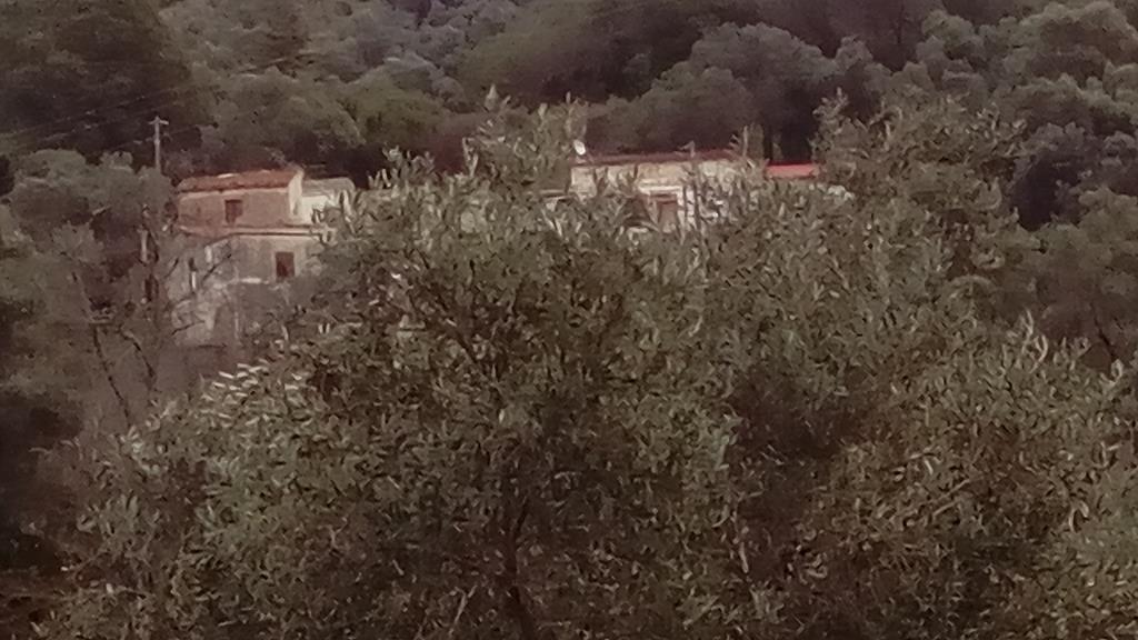 Sarakina oberhalb Dorf in Oliven