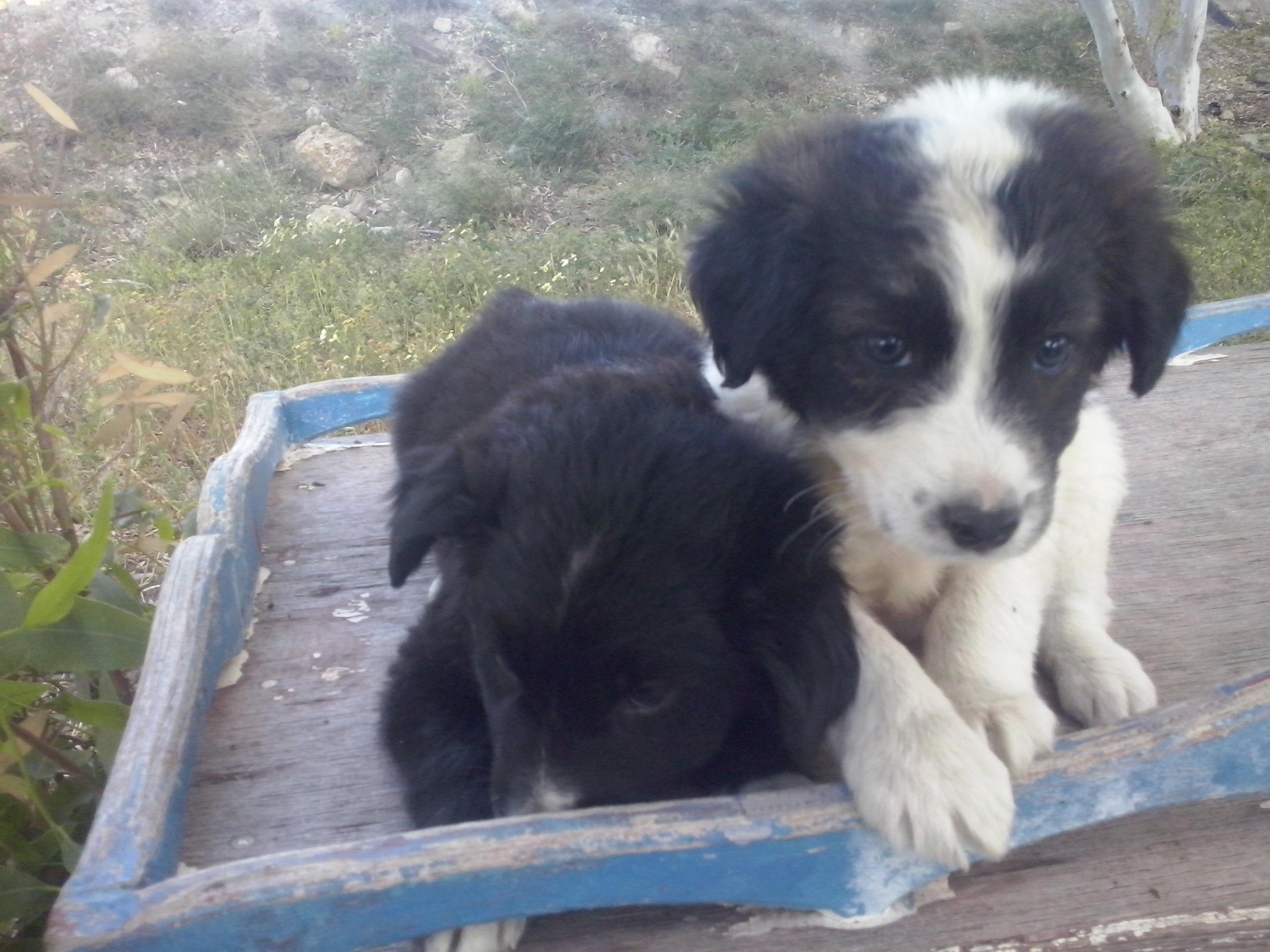PAWS neue Babies schwarzschwarzweiss