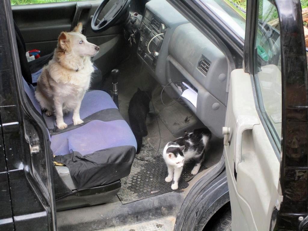 Mitso im Bus mit Katzen