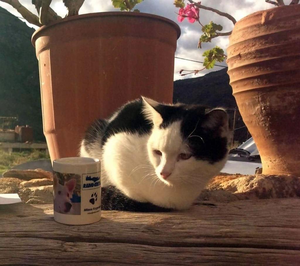 Katze und Tasse