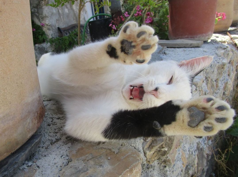 Yoga mit Manfred